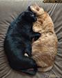 Любовь - это когда мы вместе.