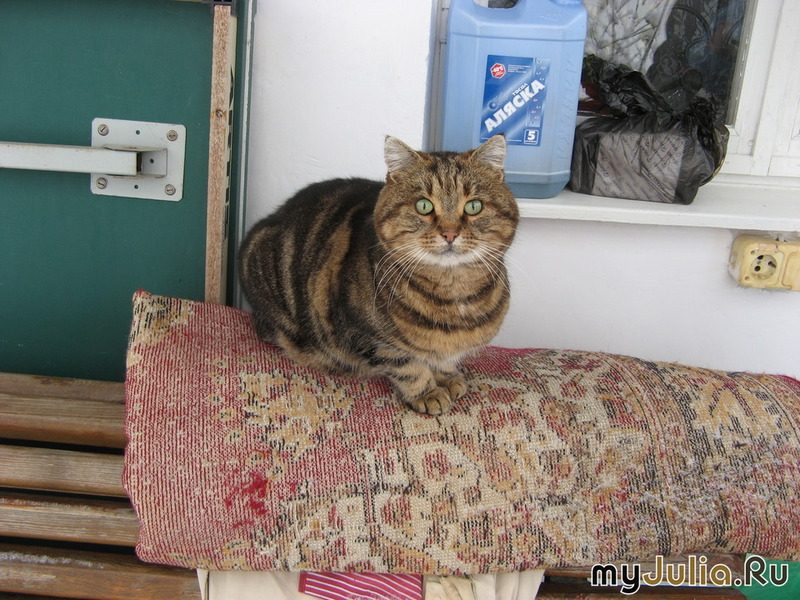 Группы животные кошки это кошки
