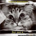 Это был только кот...