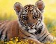 Рыжий тигрёнок