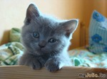 Психология здорового котёнка.
