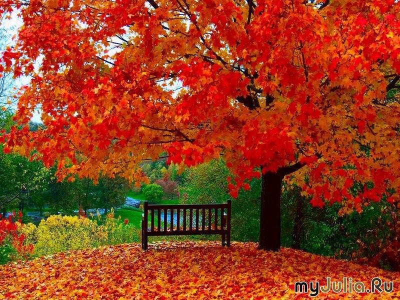 Праздник осенью в лесу и светло и
