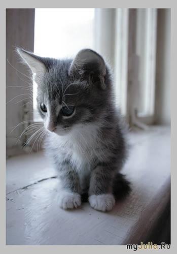 фото котёнок серый