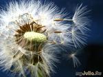 Страх перемен, или размышления о сложенных крыльях Мечты