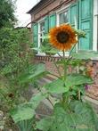 Ваше личное огородное солнце