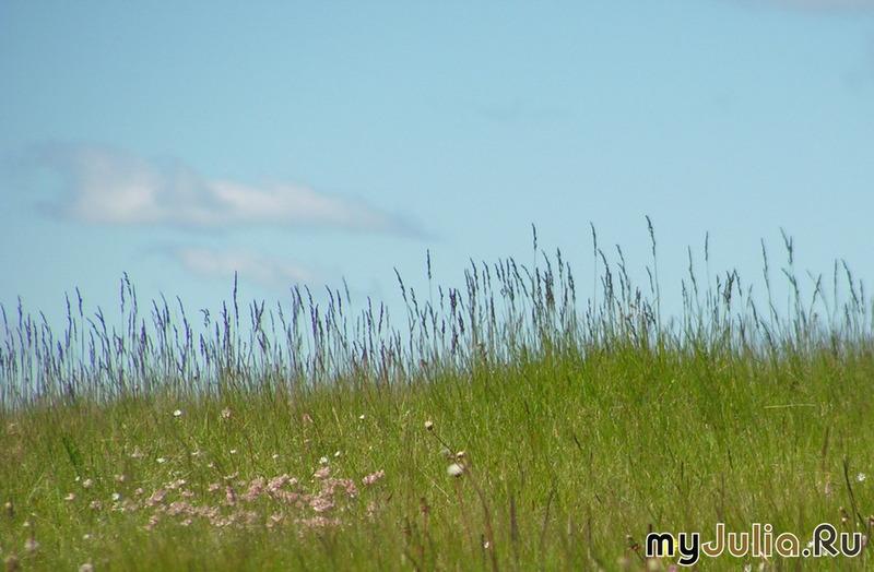 Травинки былинки