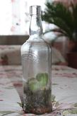 Стеклянный домик для кактуса.