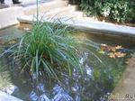 Волшебная вода осени