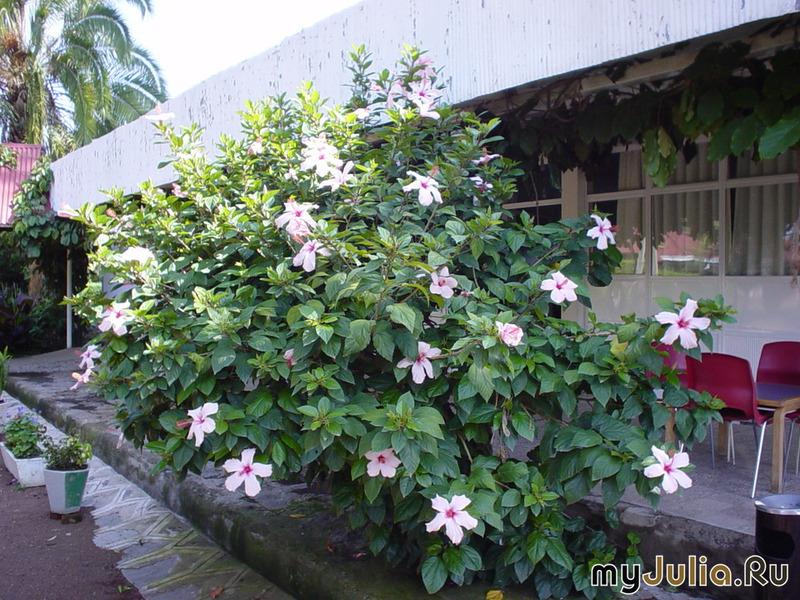 Оптовые цены на цветы прайслисты  Мир цветов