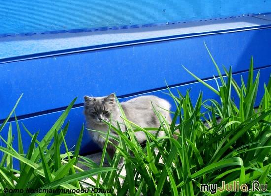 Киса на синем. 12.09.09г