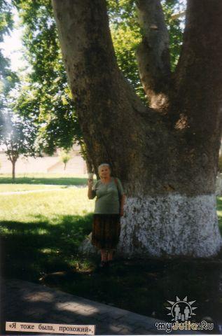 вековая чинара в парке им. Мукими
