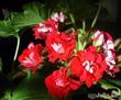 Разговор с цветами о цветах