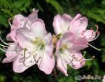 Цветы ботанического сада...