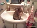 Хозяйка! Не плохо бы помыться! (кеша)