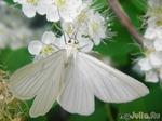 Бабочки, букашки и др. (воспоминания о лете)