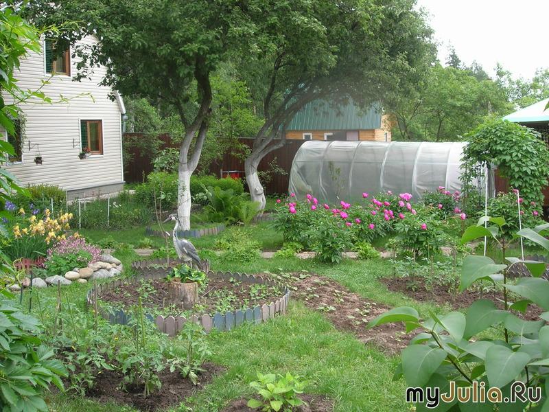 Моя уютная дача сад и огород фото 10