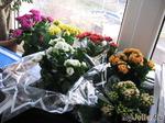 Цветы радости - Каландивы