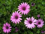 Цветы Вашего знака Зодиака