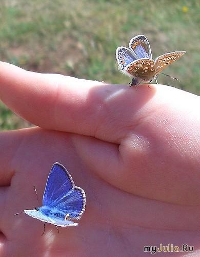 как называется сетка для ловли бабочки