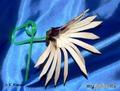 Второй цветок