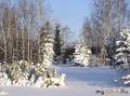 Вот такой наш сад зимой