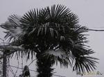 """""""Ялта зимой, пальмы в снегу..."""""""