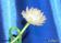 Роза из репчатого лука