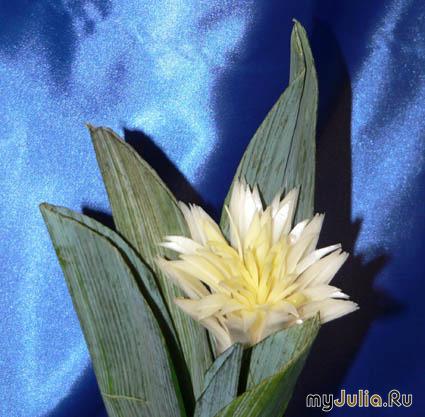 Сложная хризантема