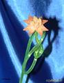 """""""Бумажный"""" цветок из моркови"""