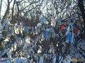 "дерево желаний в сквере.Все ""желания"" в снегу"