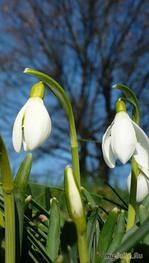 Ох как я хочу весну!
