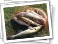 а я еще и рыбачка:))