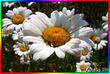 Весна, Любовь и день влюбленных.
