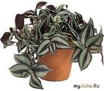 Уютные растения