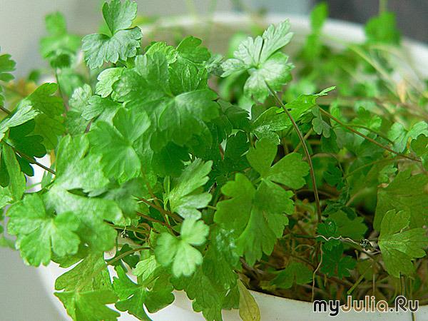 растения по знаком задиака