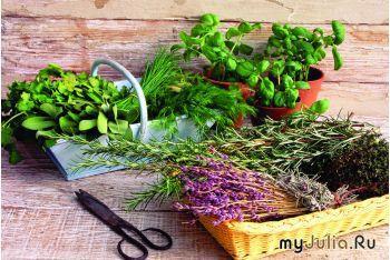 Реальный бизнес с нуля: сбор лекарственных трав, плодов, коры дуба для...