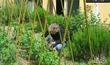 Во саду ли, в огороде
