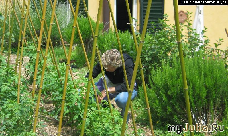 Во саду ли в огороде сад огород и