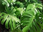 Растения, которые нельзя нести в дом.  Развеиваем мифы