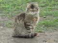 кошка номер 1