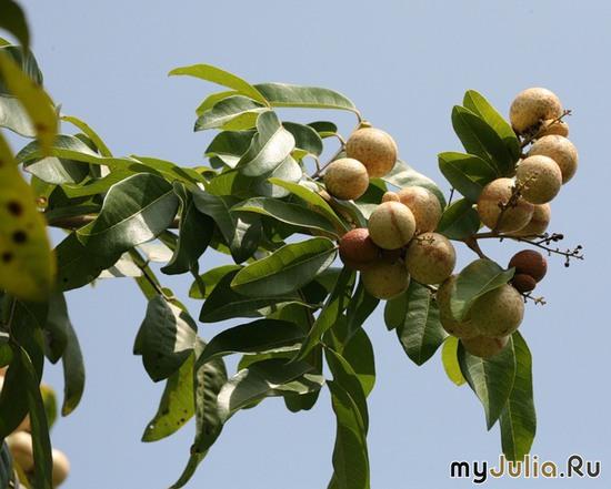 Лонган, фрукты