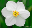 Что в имени твоем, прекраснейший цветок