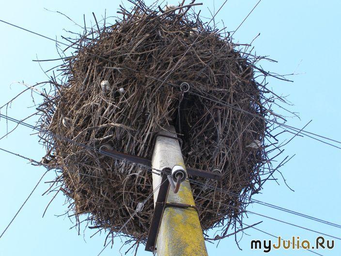 Как сделать гнездо из веток для аиста своими руками