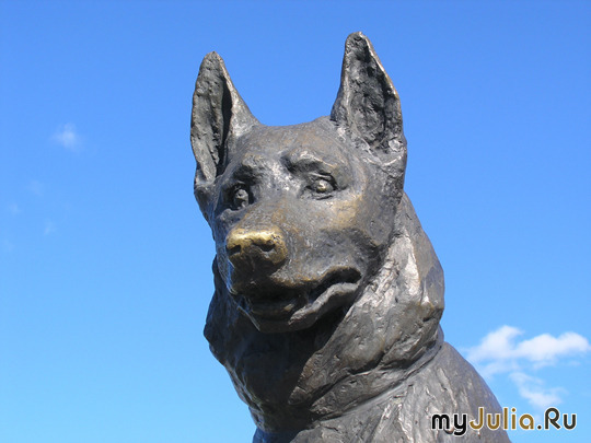 """Пес жил при станции... памятник  """"Преданности """" Тольятти на протяжении семи лет немецкая овчарка, хозяева которой..."""