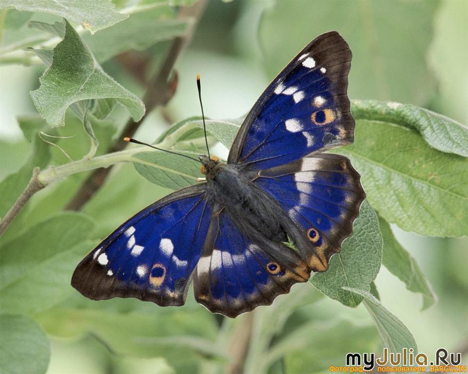 Маленькие бабочки вышивка крестом схемы - af18
