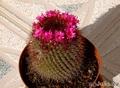 цветочная корона