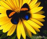Сад бабочек... на Вашем балконе!
