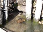 жабки уже купаются