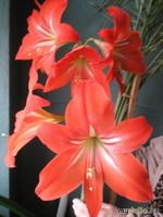 Весна...Цветы... или мамина радость!