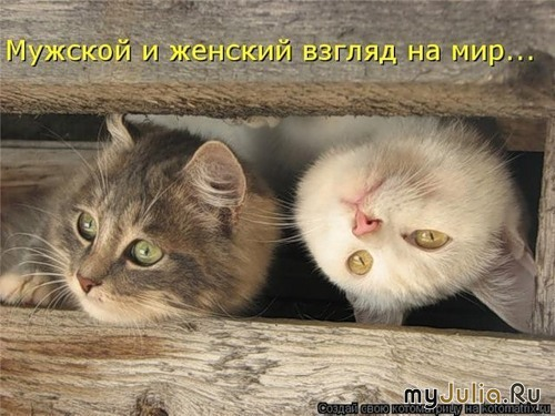 Смешные истории - Страница 4 389068_5092-800x600